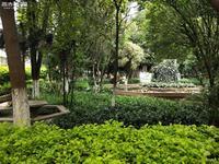 玉溪一中生活区 环境清幽雅致 花草满园 绿树成荫 学习生活融为一体