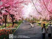 10多万买商铺,贷款无月供无利息!亚洲的玫瑰花采集点