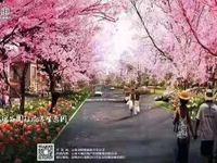 国家4A级景区 泸西阿庐古洞连票 24万 投 资一楼商铺