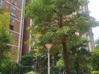 财富时代 中心城区的单身公寓 方便看房子 1100每个月