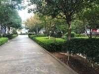 盛世庭院 带子母车位 一梯两户 客厅正对小区中心花园 只卖到这个月20号